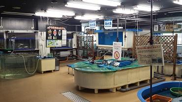 網走市水産科学センター03.jpg